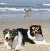 Huntington Beach - Dog Beach